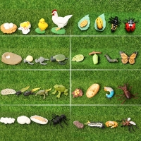 Simulation Animals Ladybug,Butterfly,Frogs,Turtle,Ant,Mosquito,Chicken Growth Life Cycle Figurines Model Action Figures Toy